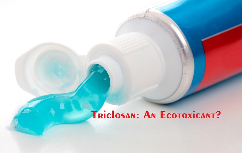thesis antimicrobial activity