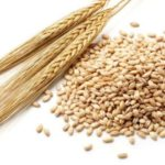 Eating barley can reduce cardiovascular risk