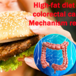 High-fat diet and colorectal cancer: Mechanism revealed