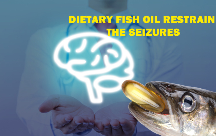 Dietary Fish Oil Restrain the Seizures