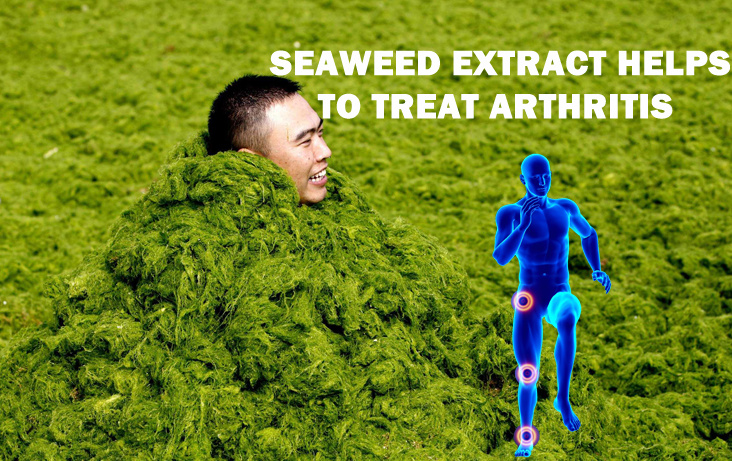 Seaweed Extract helps to treat arthritis