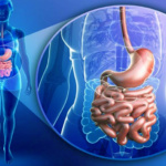 Small Intestine Permeable Peptides Facilitate Biopharmaceutical Absorption in Digestive Tract